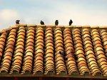 dachówki na dachu skośnym